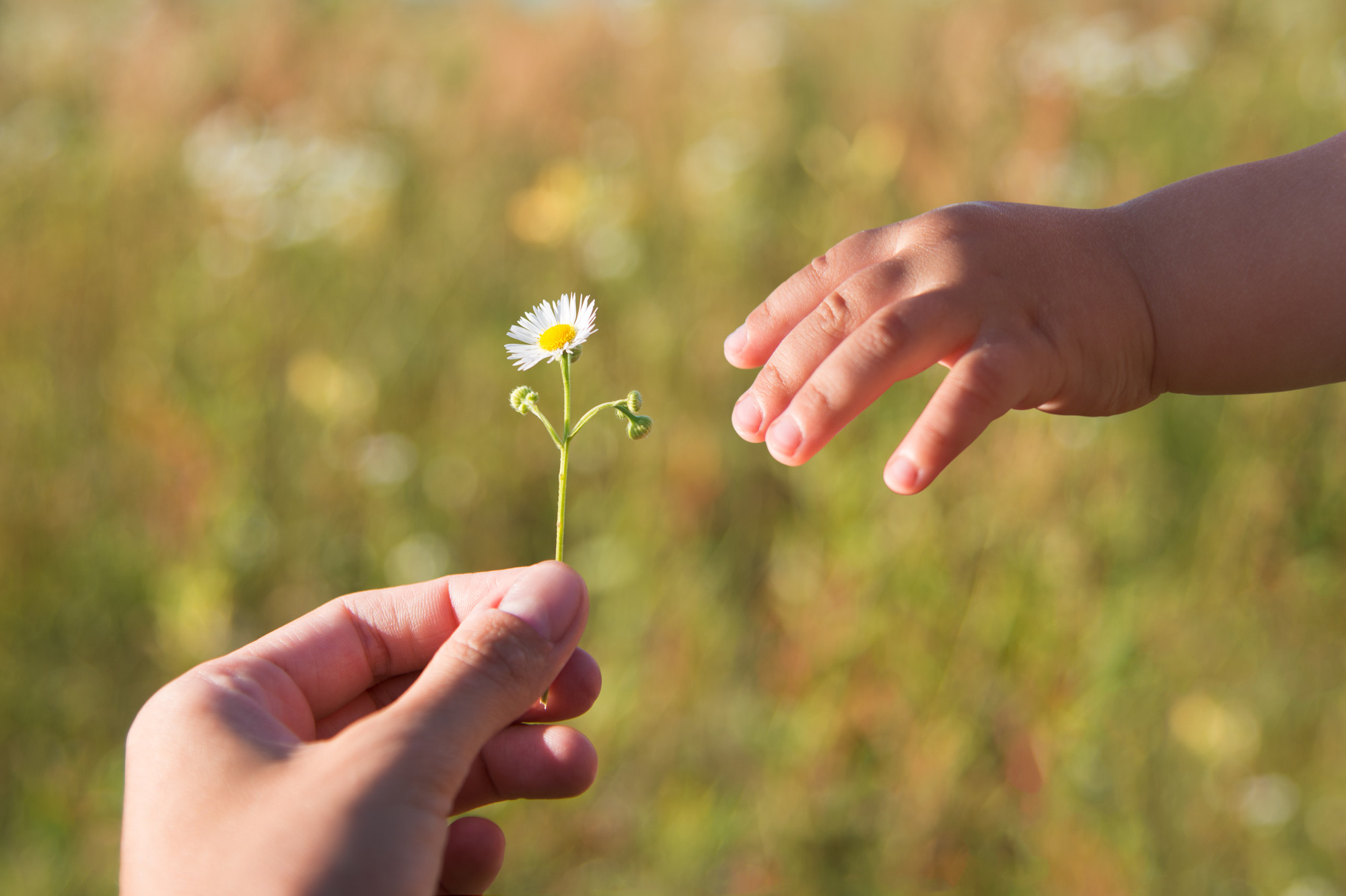 Close up of womans hand giving little white flower to child