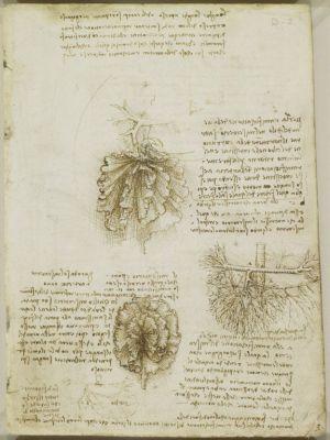 O mesentério já tinha sido identificado nos manuscritos de Da Vinci em 1500