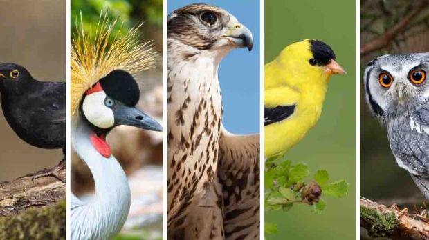BIRDS SYMBOLISM