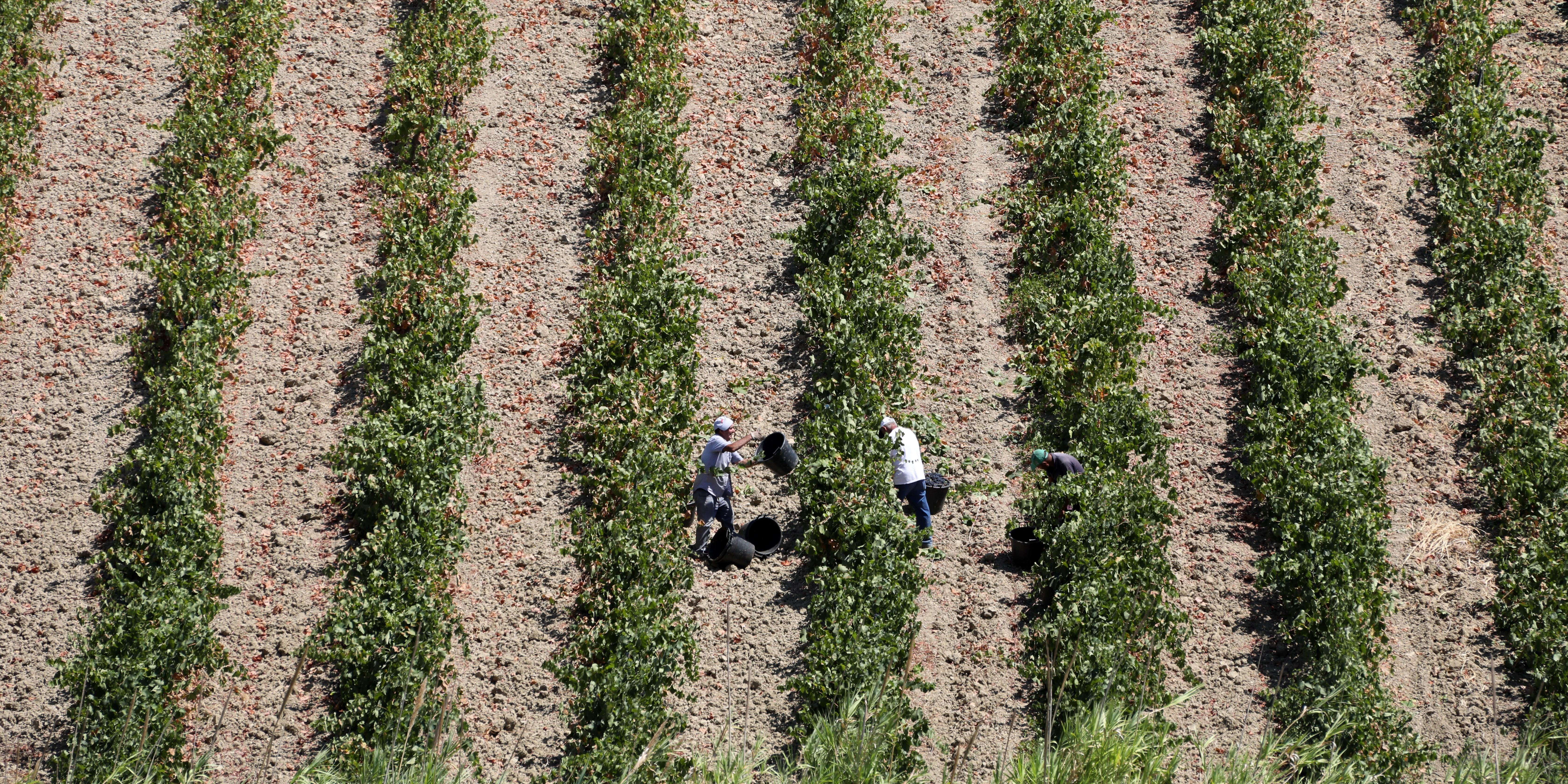 WORK FARM
