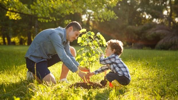 Plantar árvore