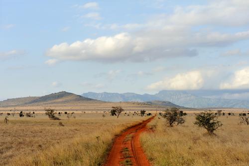 SAVANA, KENYA, AFRICA