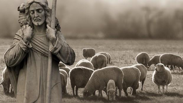 SHEPHARD