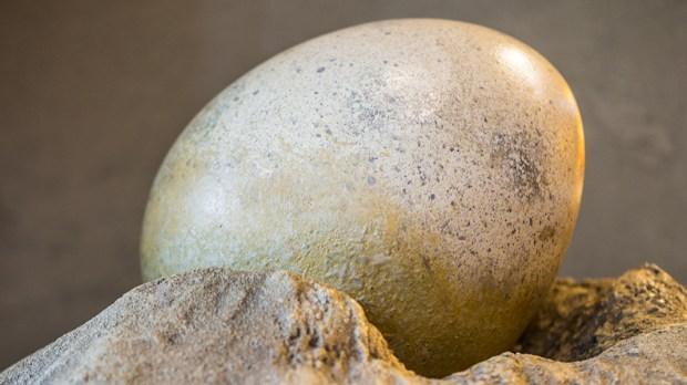 Matemática do ovo