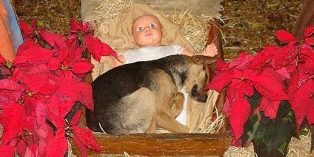 Cãozinho presépio